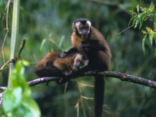 Visite de la forêt tropicale amazonienne 3D2N Manu au départ de Cusco