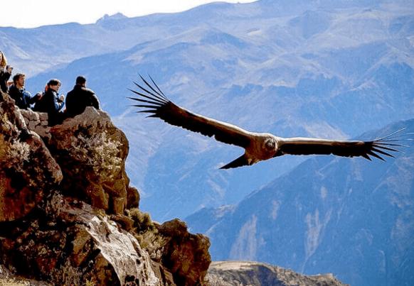 journée complète au canyon de colca + vol du condor